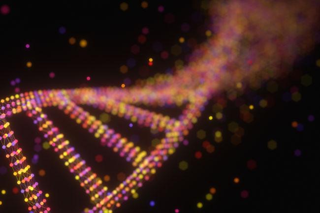 The ApoE Gene